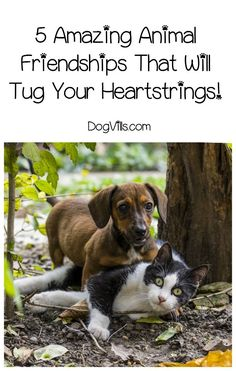 Need a little dog humor? These amazing animal friendships will tug your heartstrings, make you laugh and renew your hope that even the unlikeliest pairs can get along!