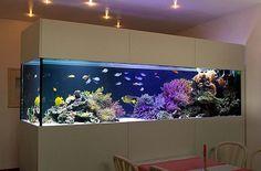 Aquarienbau | Aquarien