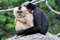 Gibbons: These animals not only form extremely strong bonds, but they also manage to have equal rights in their relationships.