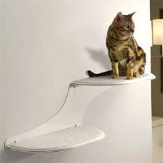 wall mounted cat tree thor scandicat. Exellent Wall Mounted Cat Tree Thor Scandicat Find This Pin And Samehadaku.us