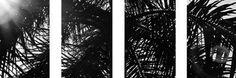 Black and White Palm Tree Header