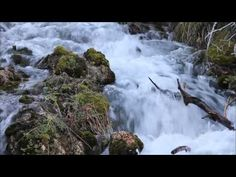 ▶ All Creatures of Our God and King - Mormon Tabernacle Choir - YouTube also one of my favourite hymns i think you can tell i love the same style spring easter songs are my fav    More LDS Gems at:  www.MormonLink.com
