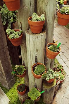 SBG thinks peeler poles are cheap enough to create this tower in post holes to show off the best plants.