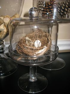 May Cloche with nest