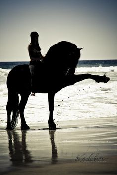 Dressage on the beach