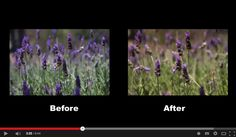Setting Your White Balance with a Gray Card – a Tip from Phil Steele