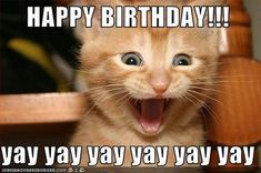 Funny Cat Birthday Memes for the Feline Lovers in Your Life Cat Birthday Memes, Funny Happy Birthday Meme, Birthday Stuff, Birthday Wishes, Birthday Cards, Birthday Freebies, Birthday Quotes, Funny Cat Memes, Funny Cat Videos