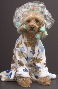 Dog grooming... To cute!