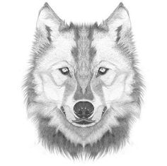 How to Draw a Wolf Head / Step By Step Lesson - Click Pic For Video!: