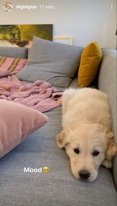 Cute Puppies, Cute Dogs, Dogs And Puppies, Doggies, Pets 3, Golden Retriever, Retriever Puppy, Instagram Story Ideas, Cute Creatures