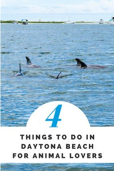 Sea animal lovers will love these great places in Daytona Beach FL
