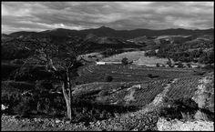 Im Hinterland von Banyuls an der Côte Vermeille, Frankreich