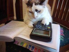 """The cat did my homework."""