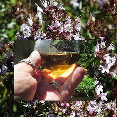 Mon délicieux jardin secret ( blog : confitures , liqueurs , vins et autres douceurs ): Liqueur de thym