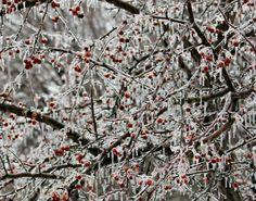 Winter Ice 2014   Glenn Studios: