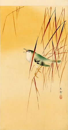 After Phil pointed me in the direction of the Japanese artist, Ohara Koson, I managed to find quite a few lovely reference images by him: . Japanese Ink Painting, Japan Painting, Chinese Painting, Chinese Art, Japanese Bird, Japanese Prints, Ohara Koson, Wildlife Paintings, Art Japonais