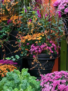 This autumn, take advantage of beautiful blooms by adding chrysanthemums to your garden. Fall mums are a great choice for adding color in cooler weather. They're versatile, available as annuals or perennials, and can be planted in containers. Plus, check out our instructions for growing mums, and what varieties, shapes, and types of mums you should know.