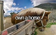 Own A Horse. # Bucket List # Before I Die