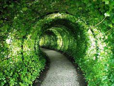 Green Tunnel, Castle Garden, United Kingdom