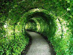 Green Tunnel, Castle Garden, United Kingdom