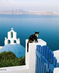 Cat on a gate in Santorini, Greece. ((I could sit by him all day. Care for a drink, Jeanne? ))