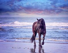 Online Art Contest - Winners to Appear in National Billboard Campaign Beautiful Horse Pictures, Most Beautiful Horses, All The Pretty Horses, Cute Animal Pictures, Animals Beautiful, Cute Animals, Beautiful Gorgeous, Cute Horses, Horse Love