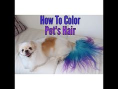How To Color Pet's Hair #ombre #cottoncandy