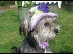 Gorro y sombrero para perro parte 2/ how to crochet a dog hat. part 2 - YouTube