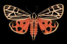 Majestic Moths Captured Under a High Resolution Scanner by Jim des Rivieres #inspiration #photography