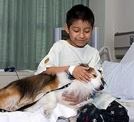 AnimalSense | Animal Assisted Therapy: Tips on what it takes to become a therapy dog.