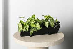 The ideal vertical planter for units, balconies and small spaces. The planters can be connected vertically and horizontally, enabling your vertical garden to be tailored to the size you require, no matter how large or small. When connected the water flow system circulates through each planter, meaning you only need to water the top corner of your garden to nourish each plant. Your vertical garden can either be fixed to the wall or stand alone on a mobile rack. Each planter holds four plants. Vertical Planter, Planter Pots, Water Flow, Plant Design, Soft Furnishings, All Design, The Locals, House Plants, Cool Designs