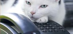 Cat Gets a Voice Message -- And Freaks the Heck Out | Catster
