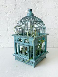 Air Plant in Blue Bird Cage Distressed Teak by EarthSeaWarrior