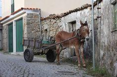 Donkey cart.