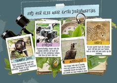 Stickers-dierenweetjes-Albert Heijn