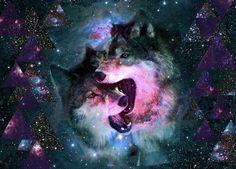 Imágenes de Lobos HIpsters