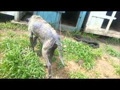 Rescate a LÍMITE de Salvador 4 10 15 ya en ANIMAL HELP URUGUAY