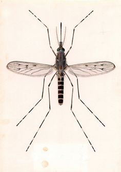 The Museum's Library and Archives collection is an unparalleled resource for natural historians, researchers, artists and academics. Natural History Museum, Insect Art, Bugs And Insects, Nature Images, Dracula, Cgi, Drawing S, Art Ideas, Illustrations