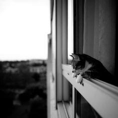quoi de mieux qu'un gentil petit chat pour commencer la semaine  - by emmanuelle brisson.