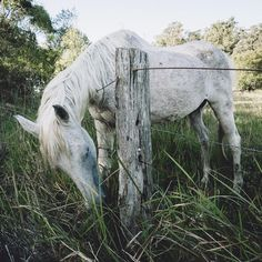 Beautiful horse we approached while driving up to Byron Bay // Shot with the Olympus E-M5 II // Follow me on insta @leximphoto // #horse #byronbay #olympus