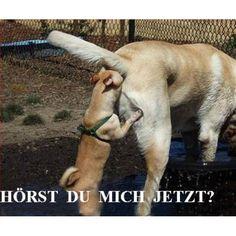 Hunde haben bekanntlich ganz andere Kommunikationswege...