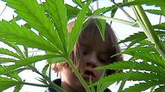 Colo. pot aids kids with seizures, worries doctors - Yahoo News