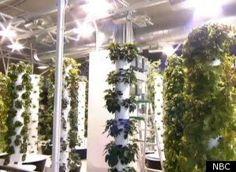 O'Hare Airport Debuts Aeroponic Vegetable Garden (VIDEO)
