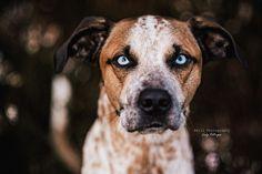 Hunde - Felli Photography - Vicky Fellinger Online Galerie, Dog Photography, Pitbulls, Dogs, Animals, Photo Shoot, Animales, Pit Bulls, Animaux