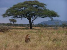 Tanzania, Serengeti National Park.