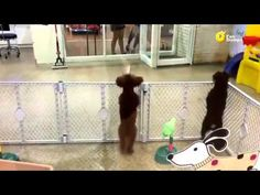 Excited puppy spots owner. this is the cutest thing ever!!