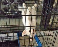 Fotos hilárias de gatos atrapalhados