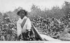 A 7-year-old cotton picker.