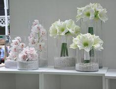 Flowers by Jane Packer Hippeastrum