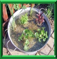 Aquaponics 4 You Container Water Gardens, Container Gardening, Patio Pond, Backyard, Permaculture, Garden Snakes, Mini Pond, Aquaponics System, Cactus Y Suculentas